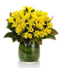 Daffodils R300.00